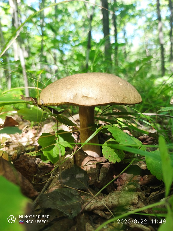 Официальное заявление Минприроды России по поводу сбора грибов и берёзового сока  в лесах Российской Федерации